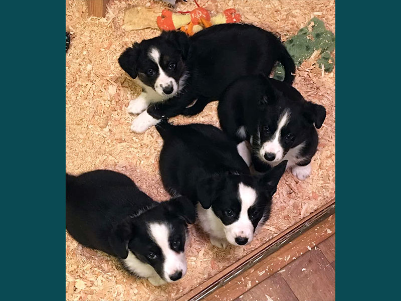 Bliss' Puppies, including Glitter