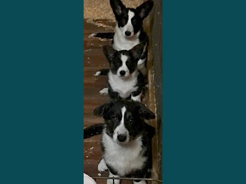 Three Puppies In A Row