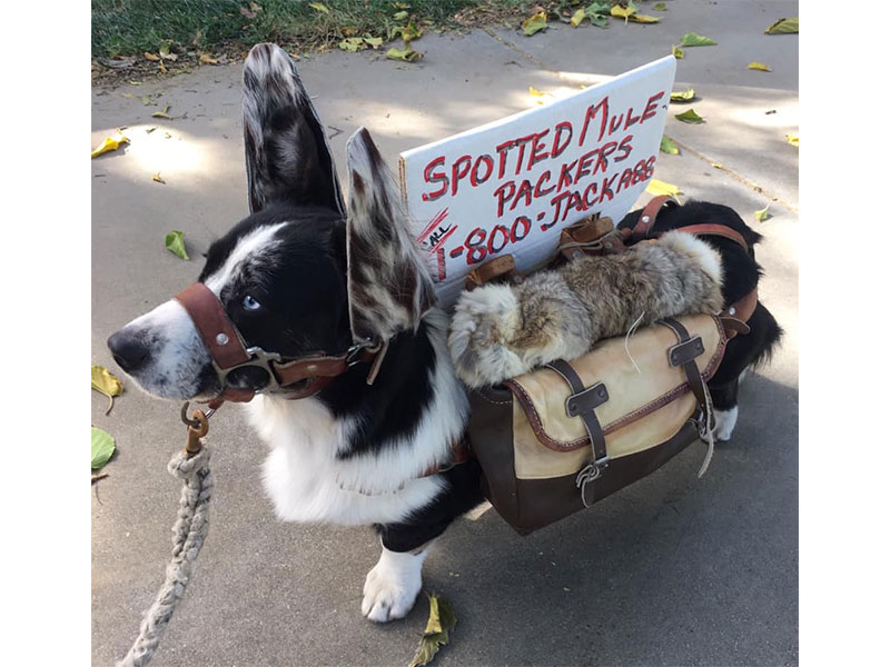 Quill the pack mule